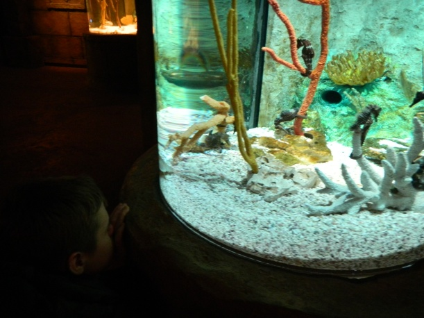 Tim and Seahorses.