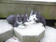 My neighbors' kittens visiting our garden.