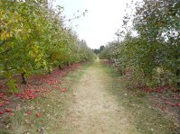 Aamodt's Apple Farm, Stillwater.