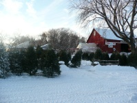 Shopping for Christmas Trees at Axdahl's Farm.