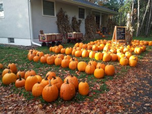 Neatly arranged pumpkins for $5.00 each.