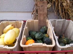Neatly sorted squashes for $2.00 each.
